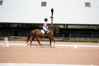 Horse 371