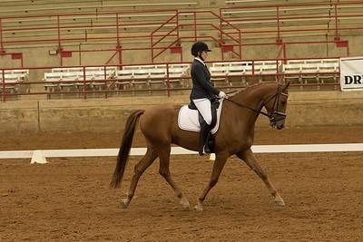 Horse 340