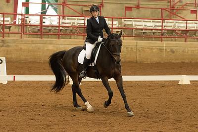 Horse 355
