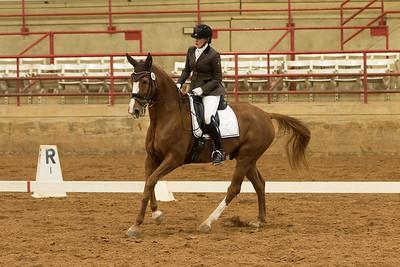 Horse 365