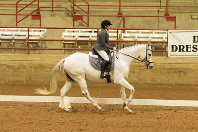 Horse 368
