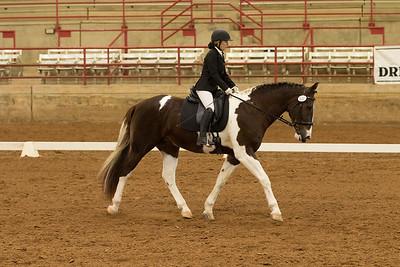 Horse 501