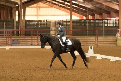 Horse 502