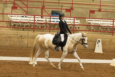 Horse 503