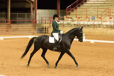 Horse 504