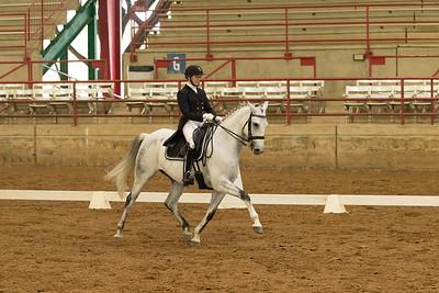 Horse 505