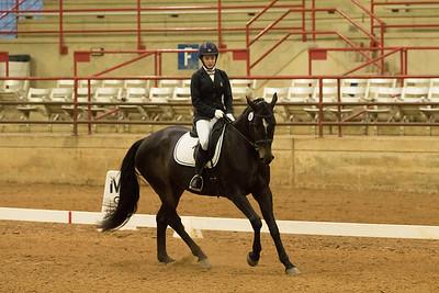 Horse 506