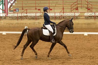 Horse 508
