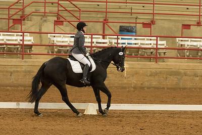 Horse 509