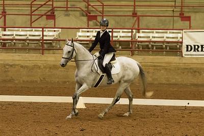 Horse 510