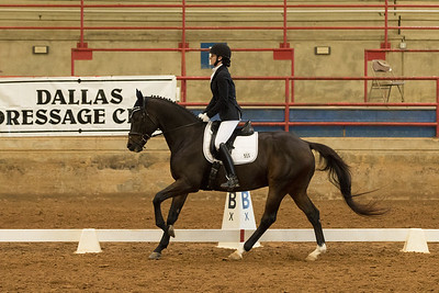 Horse 511
