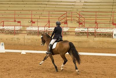 Horse 513