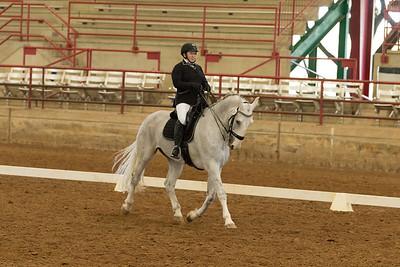 Horse 514