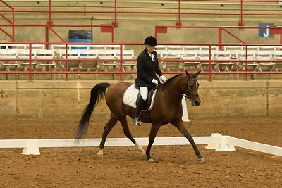 Horse 515