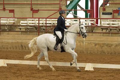Horse 516