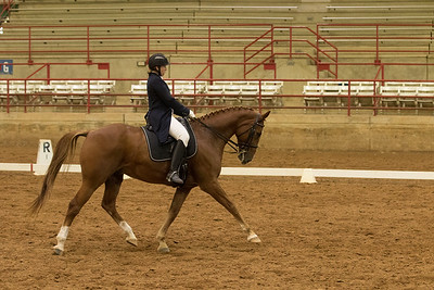 Horse 517