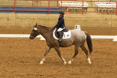 Horse 518