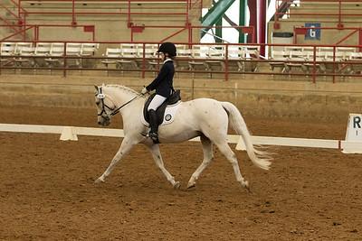 Horse 519