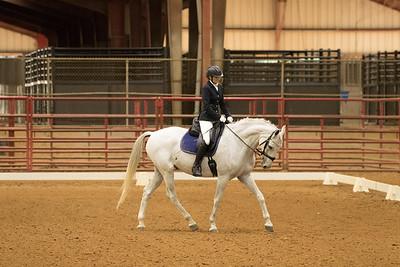 Horse 522