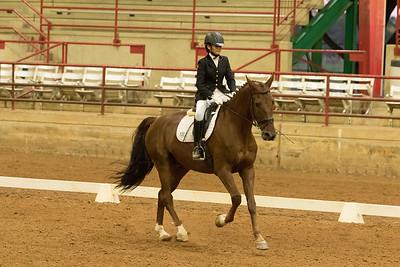 Horse 523