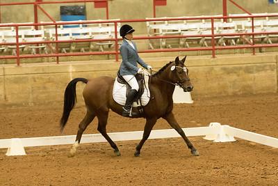 Horse 524