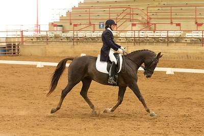 Horse 525