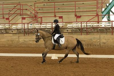 Horse 526