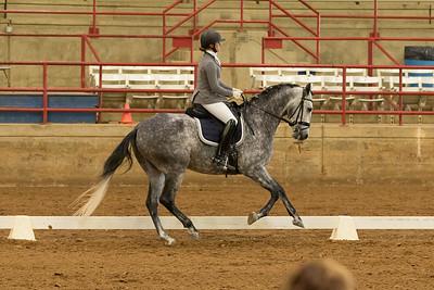 Horse 529