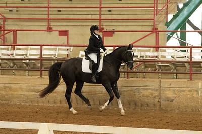 Horse 531