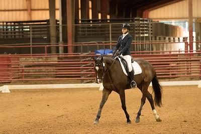 Horse 532