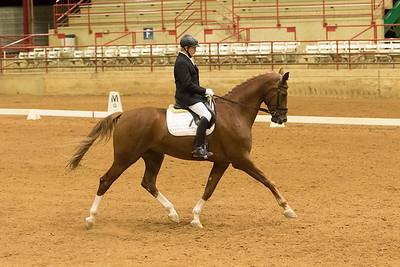 Horse 533
