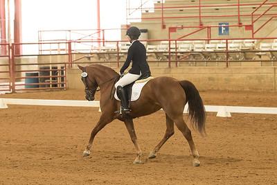 Horse 535