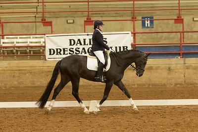 Horse 536