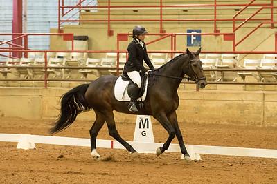 Horse 537