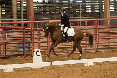 Horse 538