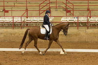 Horse 539