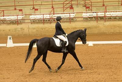Horse 540