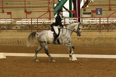 Horse 541