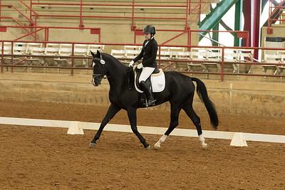 Horse 543