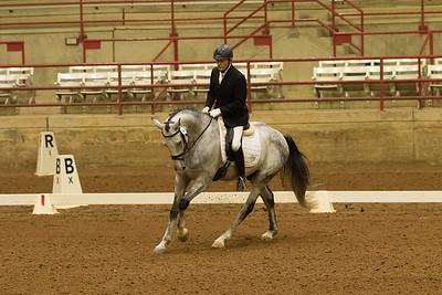 Horse 544