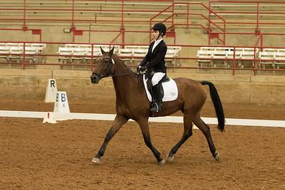 Horse 546