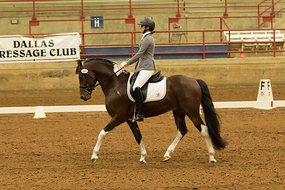 Horse 547