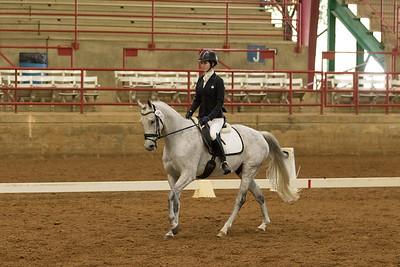 Horse 548