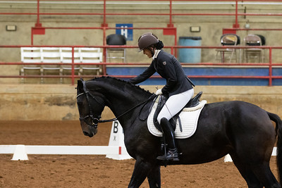 Horse 105