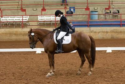 Horse 107