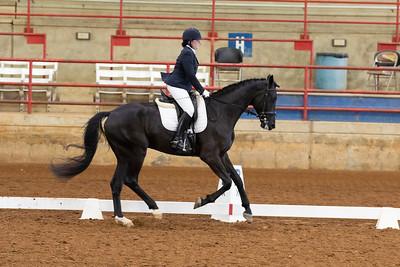 Horse 121