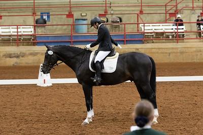 Horse 126