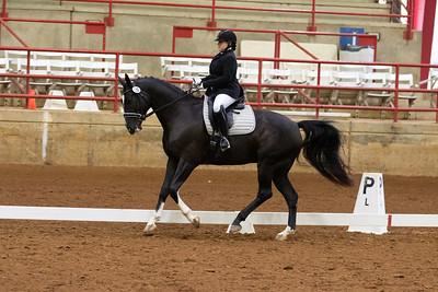 Horse 130