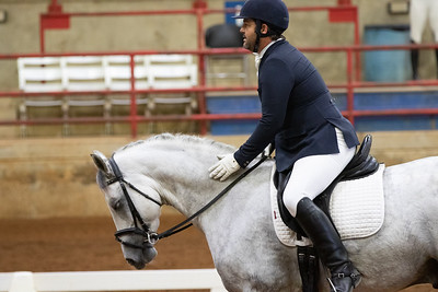 Horse 133