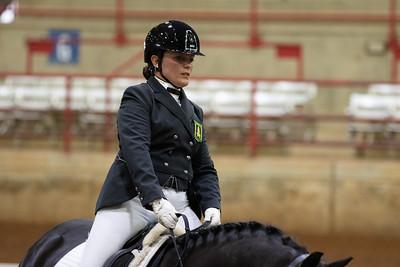 Horse 137